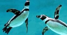 NYC Attraction | New York Aquarium