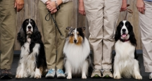 Westminster Kennel Club Dog Show, NYC Events